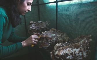 2020 Maryam picking mushrooms