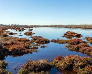 2019 Wetland