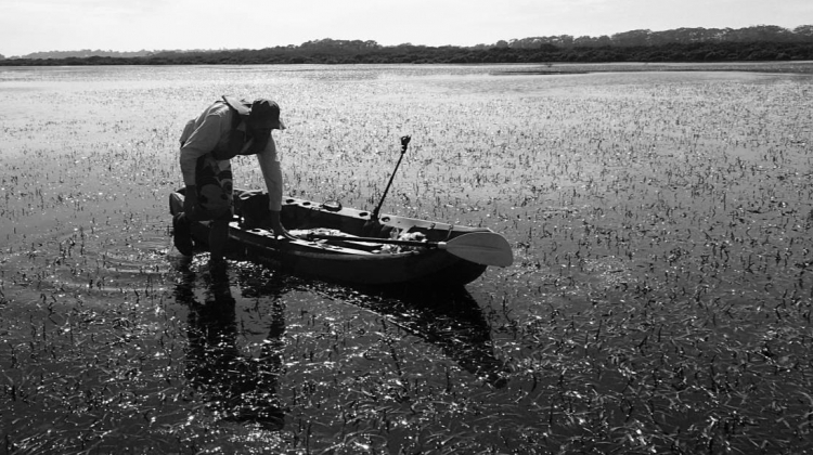"""Duncan Rayner """"Bogged in the seagrass"""""""
