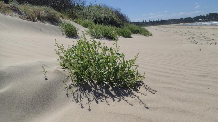 "Ian Coghlan ""Broulee Beach"""