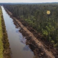 BigSwamp