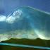 1.2-m-wave-flume