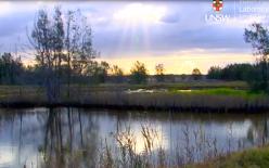 Tomago Wetland restoration