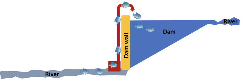 Conceptual diagram of the Tube Fishway (red), showing how it moves fish from below the dam over the wall
