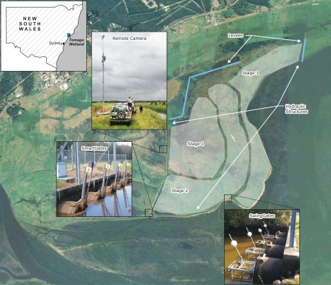 Tomago Wetland restoration project stages